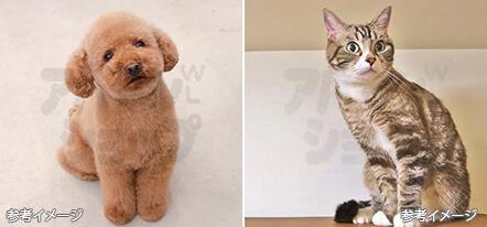小型犬またはネコ可!
